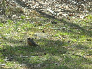 A backyard visitor