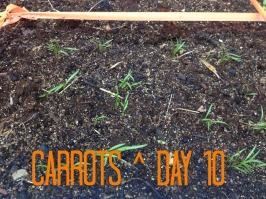 Carrot10