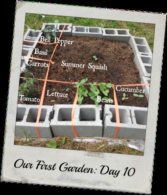 gardenday10